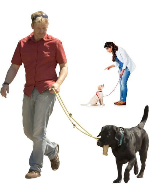 online dog trainer school