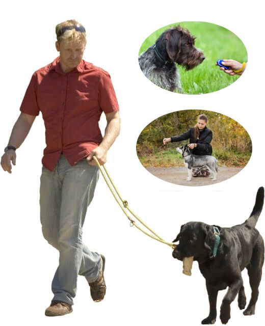 online dog trainer certification