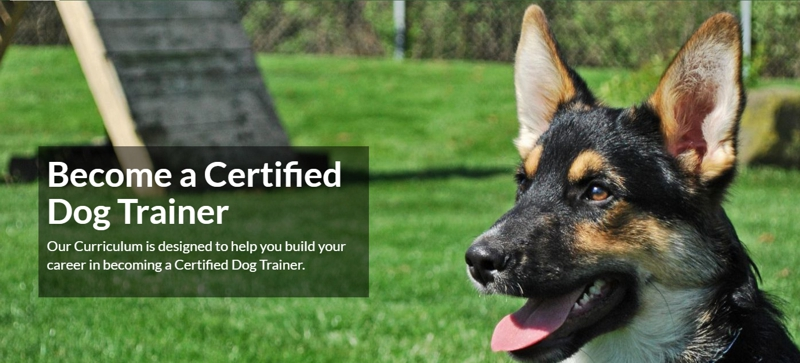 Online Dog Trainer School - Become a Certified Dog Trainer ...