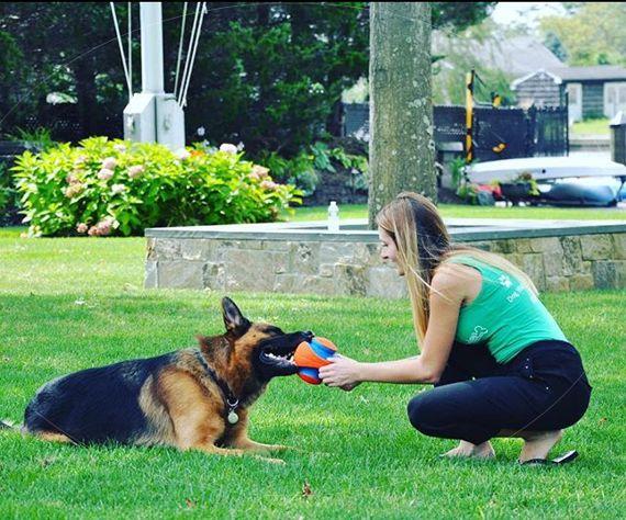 online dog training certification school