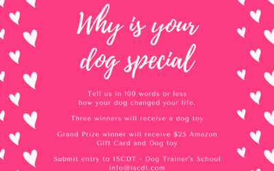 Calling all Dog Lovers!!!!