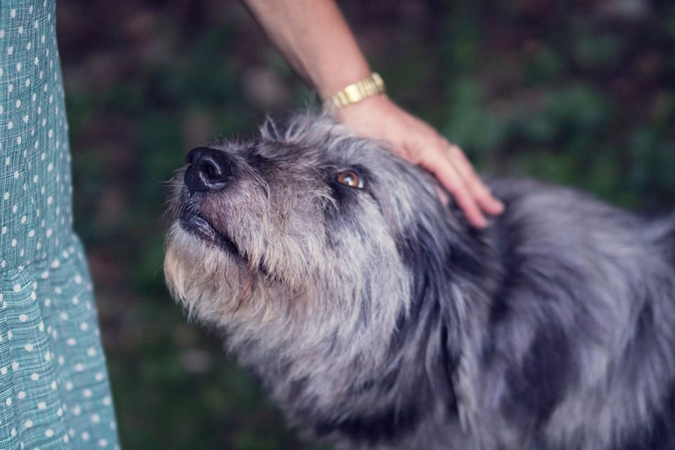 Know A Dog Who Fears Family Members?  10 Helpful Ideas