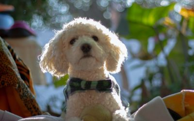 Puppy Temperament Testing