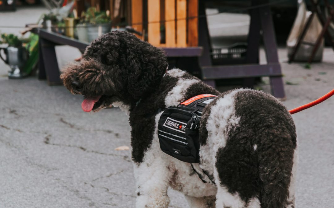 When Is It Okay To Pet A Service Dog?