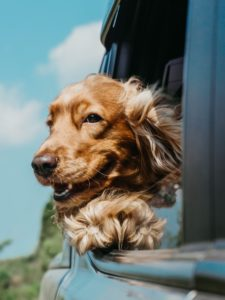can you live on a dog trainer's salary